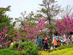 星海公園桃.jpg